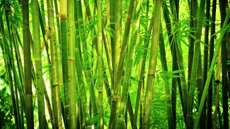 Bamboo Timber Or Grass Building Connection